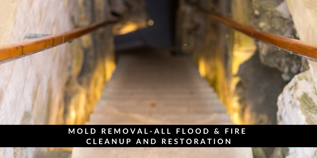 Black Mold Removal in Arlington Heights IL